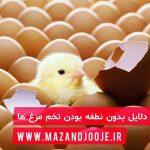 دلایل بدون نطفه بودن تخم مرغ ها